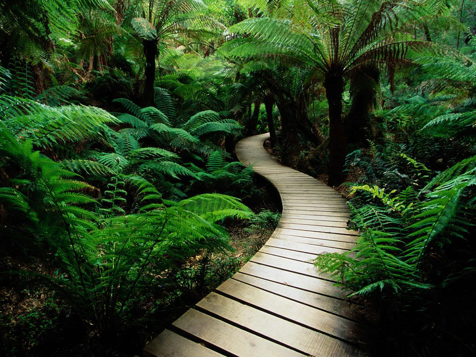 meditation mindfulnesseightfold path